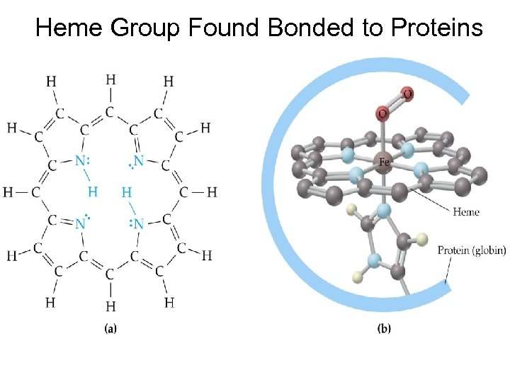Heme Group Found Bonded to Proteins