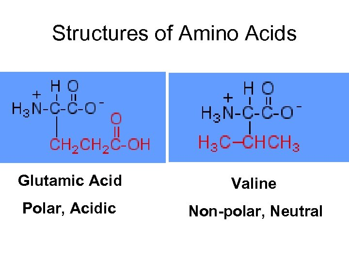 Structures of Amino Acids Glutamic Acid Valine Polar, Acidic Non-polar, Neutral