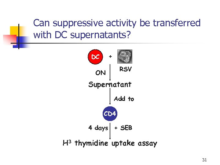 Can suppressive activity be transferred with DC supernatants? + DC RSV ON Supernatant Add