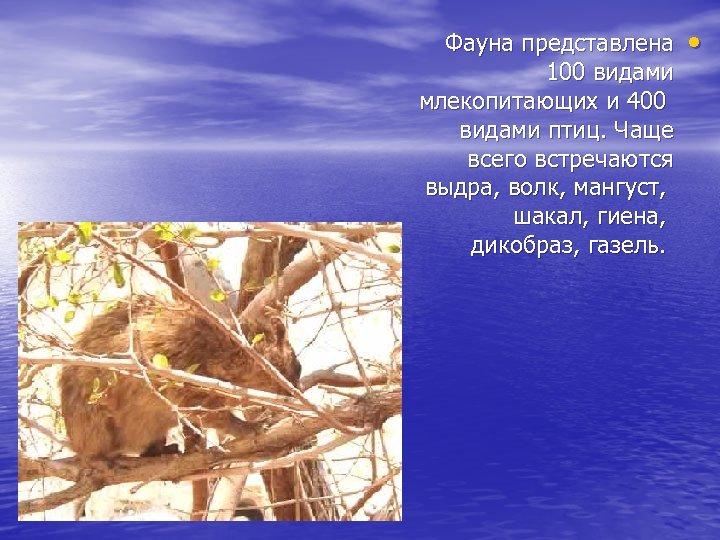 Фауна представлена 100 видами млекопитающих и 400 видами птиц. Чаще всего встречаются выдра, волк,
