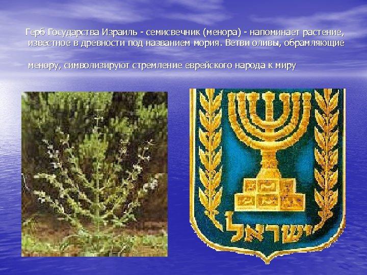 Герб Государства Израиль - семисвечник (менора) - напоминает растение, известное в древности под названием