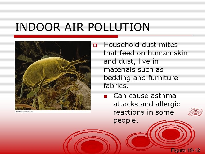 INDOOR AIR POLLUTION o Household dust mites that feed on human skin and dust,
