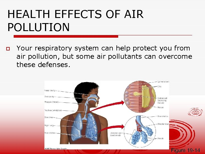 HEALTH EFFECTS OF AIR POLLUTION o Your respiratory system can help protect you from
