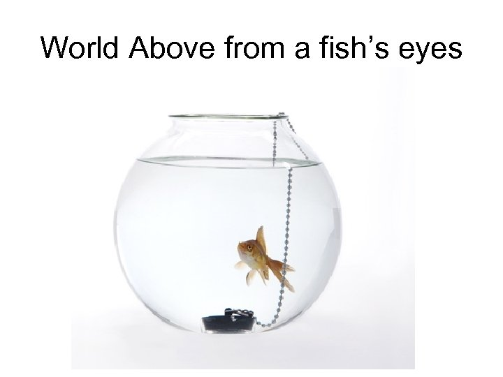 World Above from a fish's eyes