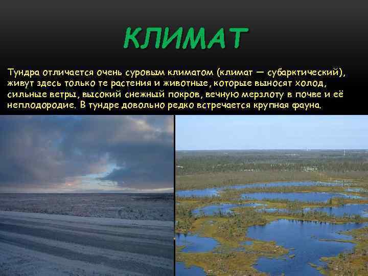 КЛИМАТ Тундра отличается очень суровым климатом (климат — субарктический), живут здесь только те растения