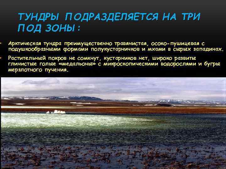 ТУНДРЫ ПОДРАЗДЕЛЯЕТСЯ НА ТРИ ПОД ЗОНЫ: • Арктическая тундра преимущественно травянистая, осоко-пушицевая с подушкообразными