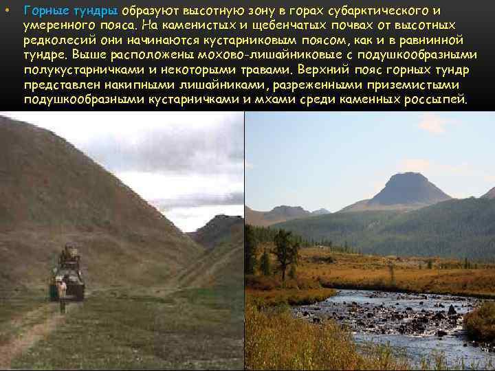 • Горные тундры образуют высотную зону в горах субарктического и умеренного пояса. На