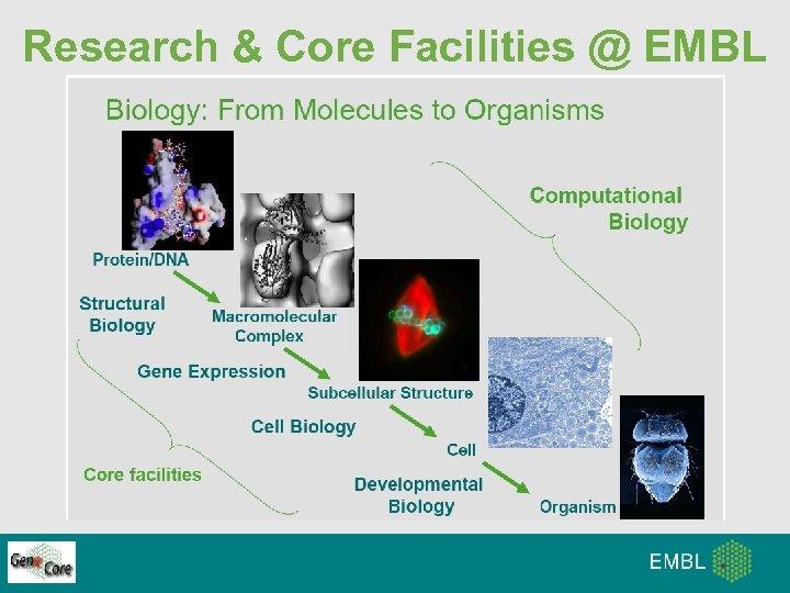 Research & Core Facilities @ EMBL