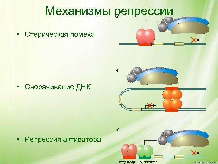 Механизмы репрессии • Стерическая помеха • Сворачивание ДНК • Репрессия активатора