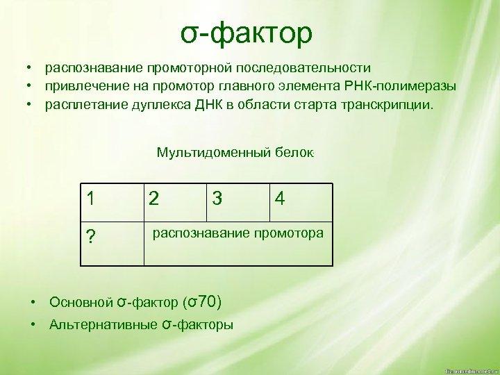 σ-фактор • распознавание промоторной последовательности • привлечение на промотор главного элемента РНК-полимеразы • расплетание