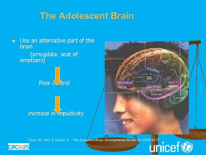 The Adolescent Brain Use an alternative part of the brain (amygdala- seat of emotions)