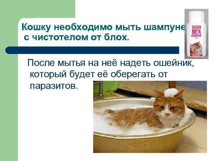Кошку необходимо мыть шампунем с чистотелом от блох. После мытья на неё надеть ошейник,