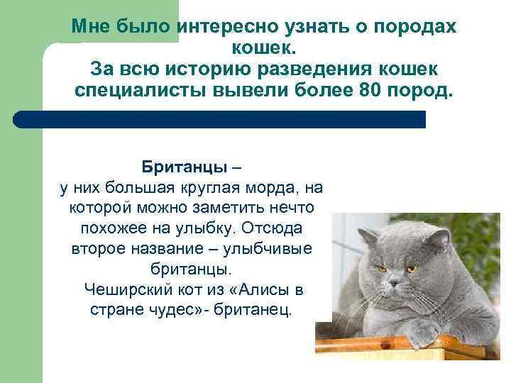Мне было интересно узнать о породах кошек. За всю историю разведения кошек специалисты вывели