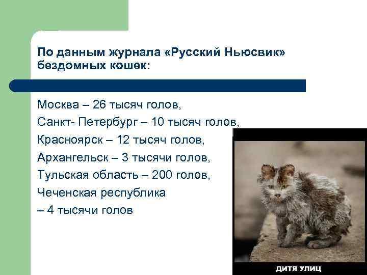 По данным журнала «Русский Ньюсвик» бездомных кошек: Москва – 26 тысяч голов, Санкт- Петербург