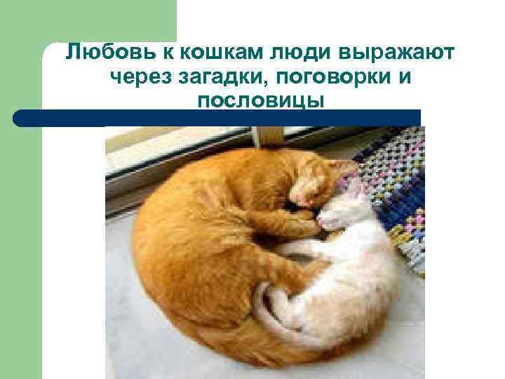 Любовь к кошкам люди выражают через загадки, поговорки и пословицы