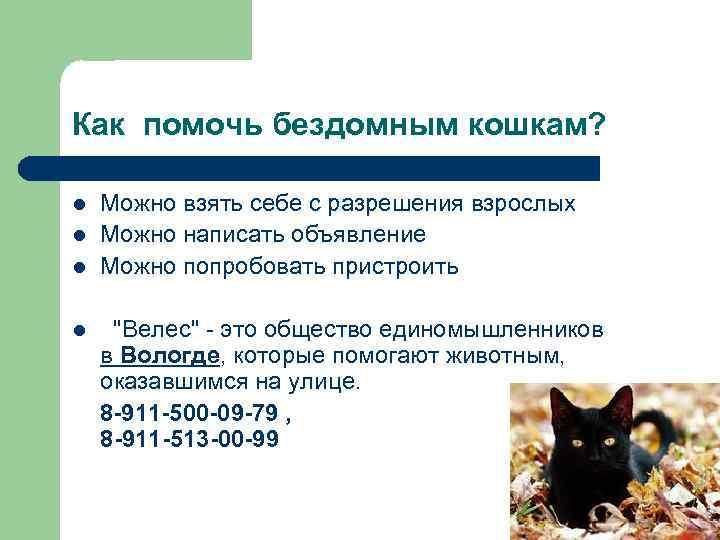 Как помочь бездомным кошкам? l l l Можно взять себе с разрешения взрослых Можно