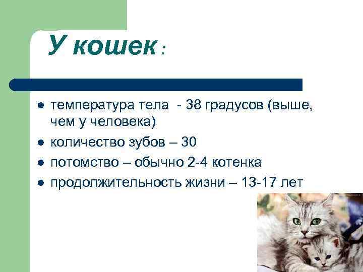 У кошек : l l температура тела - 38 градусов (выше, чем у