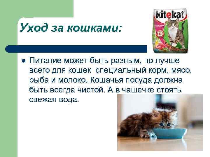 Уход за кошками: l Питание может быть разным, но лучше всего для кошек специальный