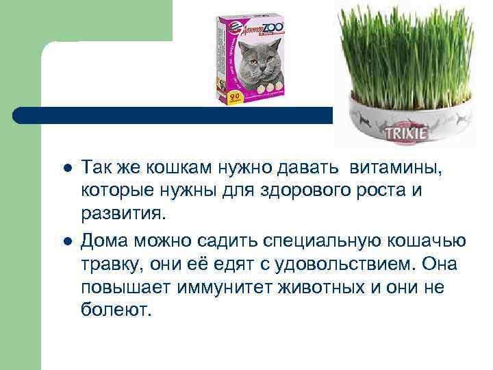 l l Так же кошкам нужно давать витамины, которые нужны для здорового роста и