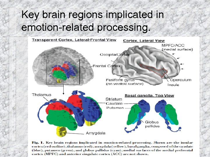 Key brain regions implicated in emotion-related processing. dmessinger@miami. edu 18