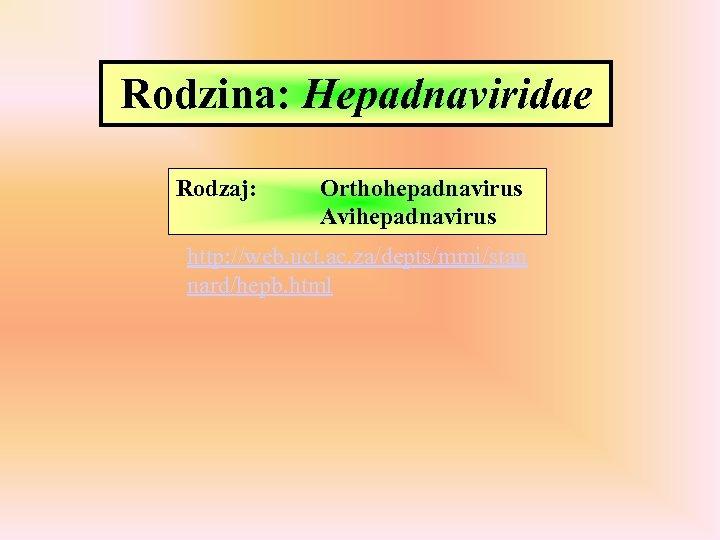 Rodzina: Hepadnaviridae Rodzaj: Orthohepadnavirus Avihepadnavirus http: //web. uct. ac. za/depts/mmi/stan nard/hepb. html