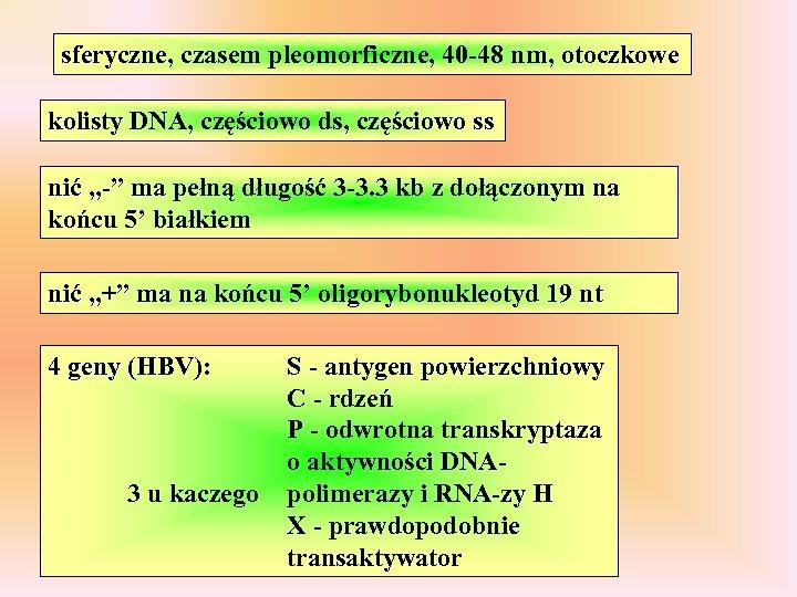 sferyczne, czasem pleomorficzne, 40 -48 nm, otoczkowe kolisty DNA, częściowo ds, częściowo ss nić