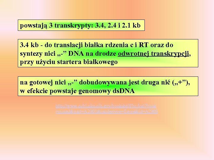 powstają 3 transkrypty: 3. 4, 2. 4 i 2. 1 kb 3. 4 kb