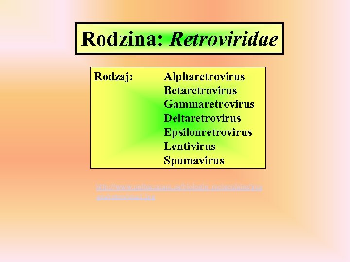 Rodzina: Retroviridae Rodzaj: Alpharetrovirus Betaretrovirus Gammaretrovirus Deltaretrovirus Epsilonretrovirus Lentivirus Spumavirus http: //www. unites. uqam.