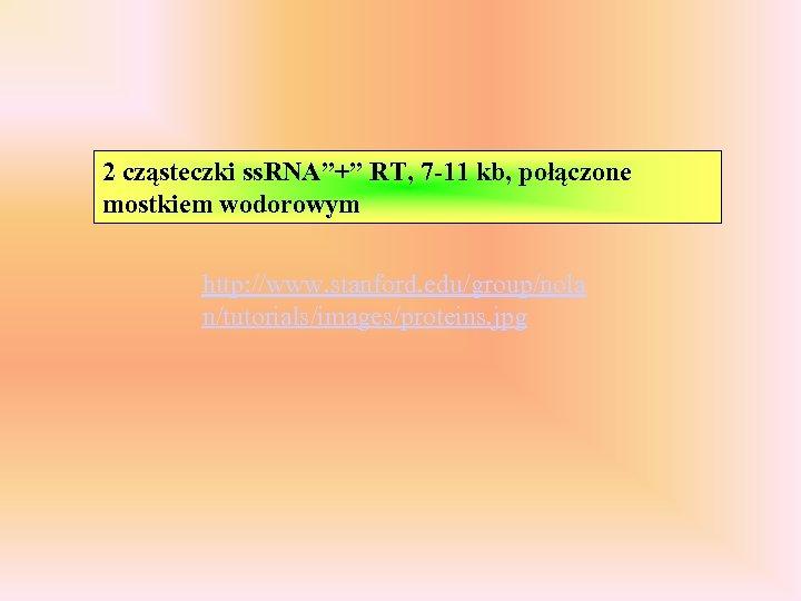 """2 cząsteczki ss. RNA""""+"""" RT, 7 -11 kb, połączone mostkiem wodorowym http: //www. stanford."""