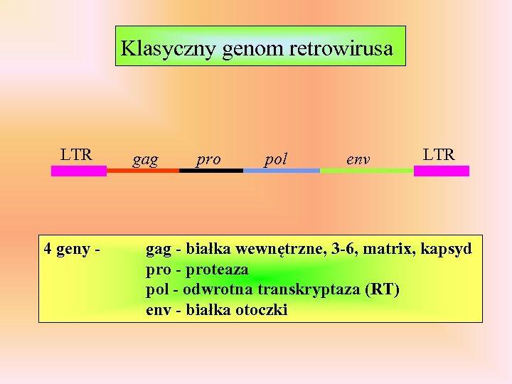 Klasyczny genom retrowirusa LTR 4 geny - gag pro pol env LTR gag -