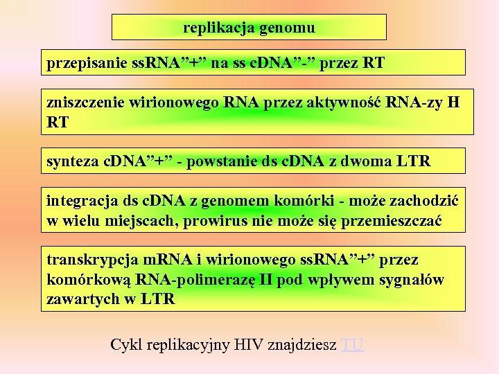 """replikacja genomu przepisanie ss. RNA""""+"""" na ss c. DNA""""-"""" przez RT zniszczenie wirionowego RNA"""