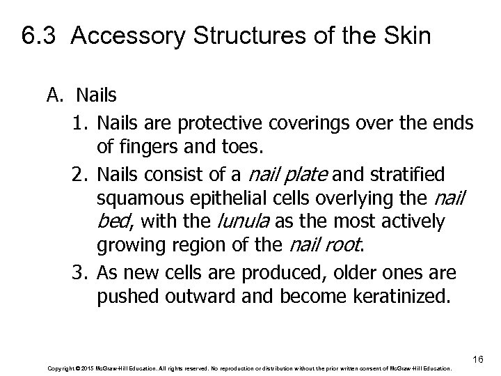 6. 3 Accessory Structures of the Skin A. Nails 1. Nails are protective coverings