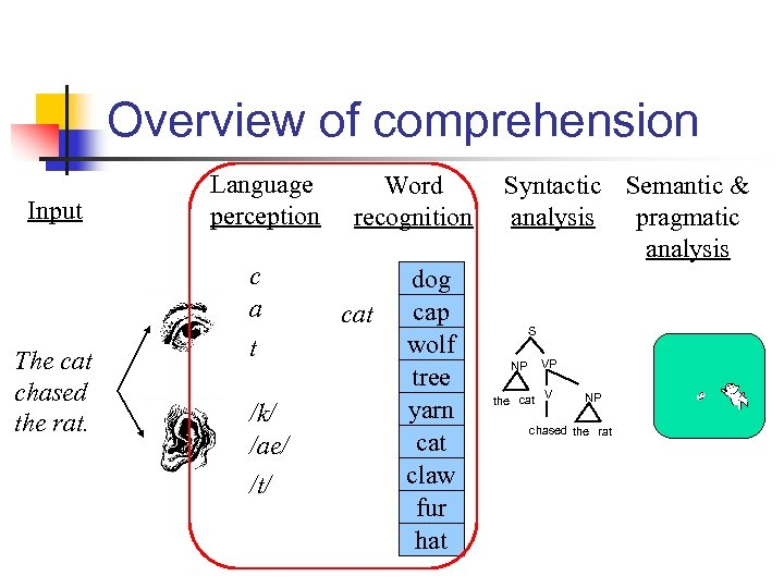 Overview of comprehension Input The cat chased the rat. Language perception c a t