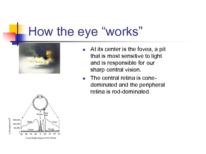 """How the eye """"works"""" n n At its center is the fovea, a pit"""