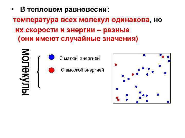 • В тепловом равновесии: температура всех молекул одинакова, но их скорости и энергии