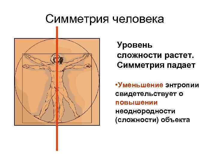 Симметрия человека Уровень сложности растет. Симметрия падает • Уменьшение энтропии свидетельствует о повышении неоднородности