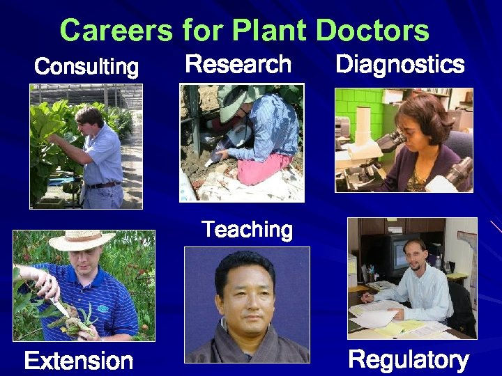 Careers for Plant Doctors Consulting Research Diagnostics Teaching Extension Regulatory