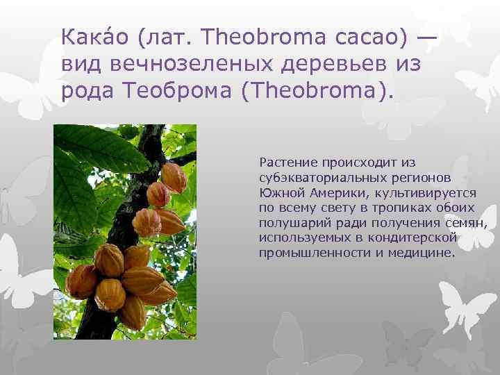 Кака о (лат. Theobroma cacao) — вид вечнозеленых деревьев из рода Теоброма (Theobroma). Растение