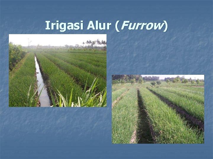 Irigasi Alur (Furrow)