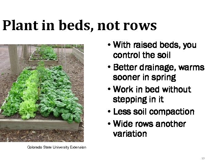 Plant in beds, not rows • With raised beds, you control the soil •