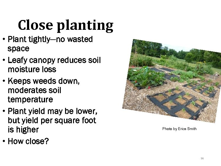 Close planting • Plant tightly—no wasted space • Leafy canopy reduces soil moisture loss