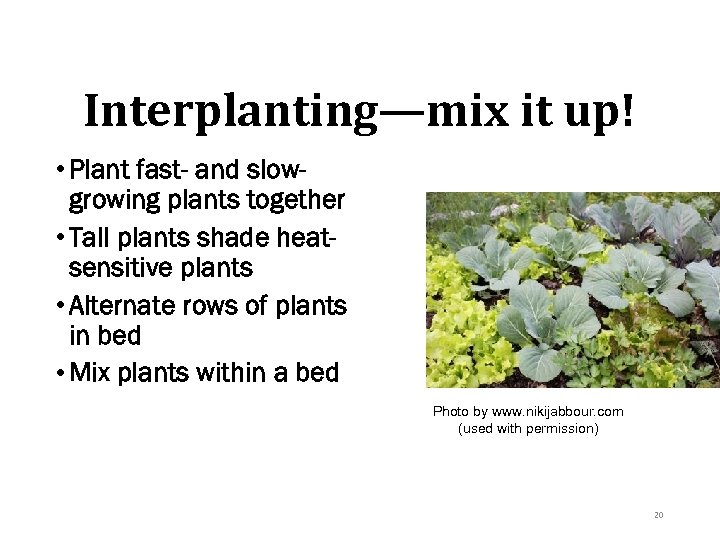 Interplanting—mix it up! • Plant fast- and slowgrowing plants together • Tall plants shade