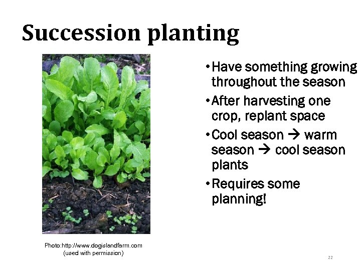 Succession planting • Have something growing throughout the season • After harvesting one crop,
