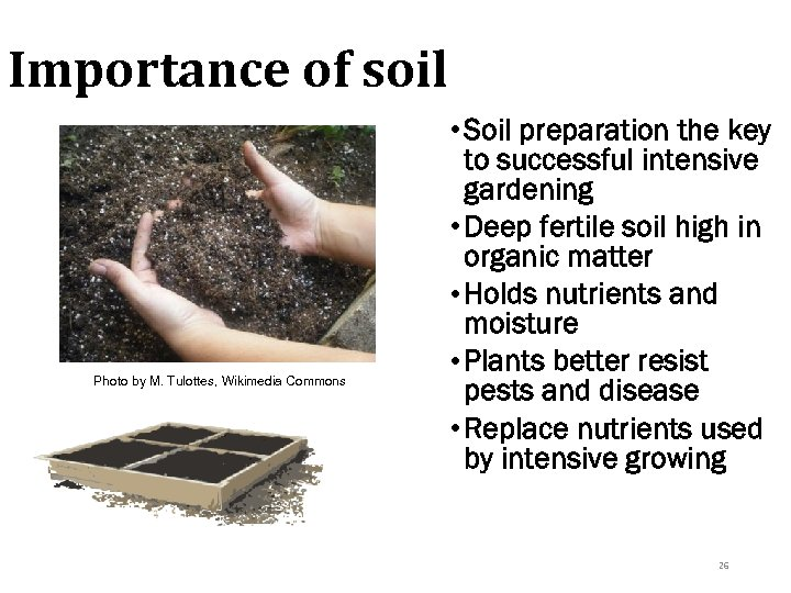 Importance of soil Photo by M. Tulottes, Wikimedia Commons • Soil preparation the key