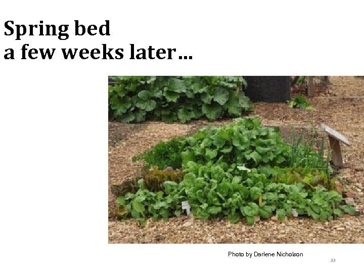 Spring bed a few weeks later… Photo by Darlene Nicholson 33