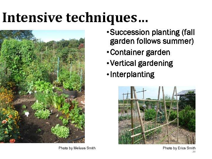Intensive techniques… • Succession planting (fall garden follows summer) • Container garden • Vertical