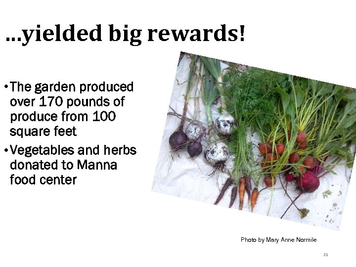 …yielded big rewards! • The garden produced over 170 pounds of produce from 100