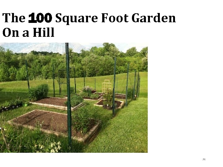 The 100 Square Foot Garden On a Hill © 2013 Pam Hosimer 36