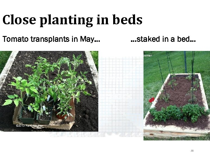 Close planting in beds Tomato transplants in May… …staked in a bed… © 2013