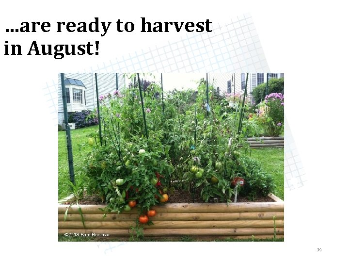 …are ready to harvest in August! © 2013 Pam Hosimer 39